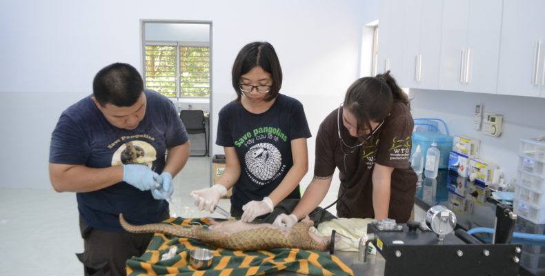 Team aus Tierärzten versorgt Schuppentier