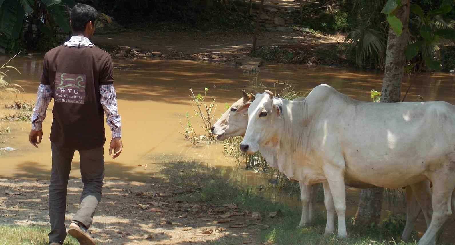 Folgen der Flut in Indien: Es fehlt an Futter und sauberem Wasser
