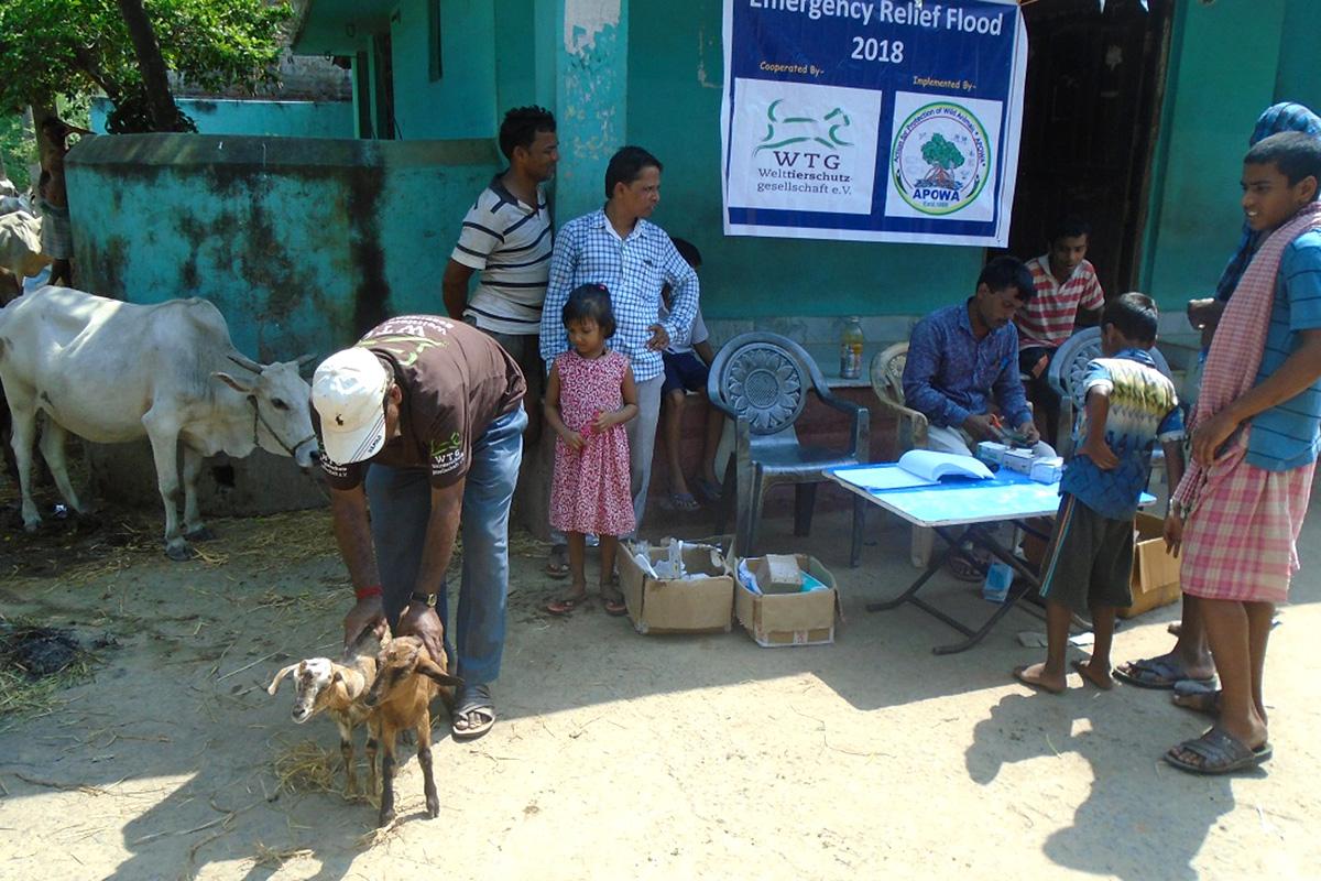 Unser Rettungseinsatz in Indien: Organisierte Hilfe für Tiere und Menschen