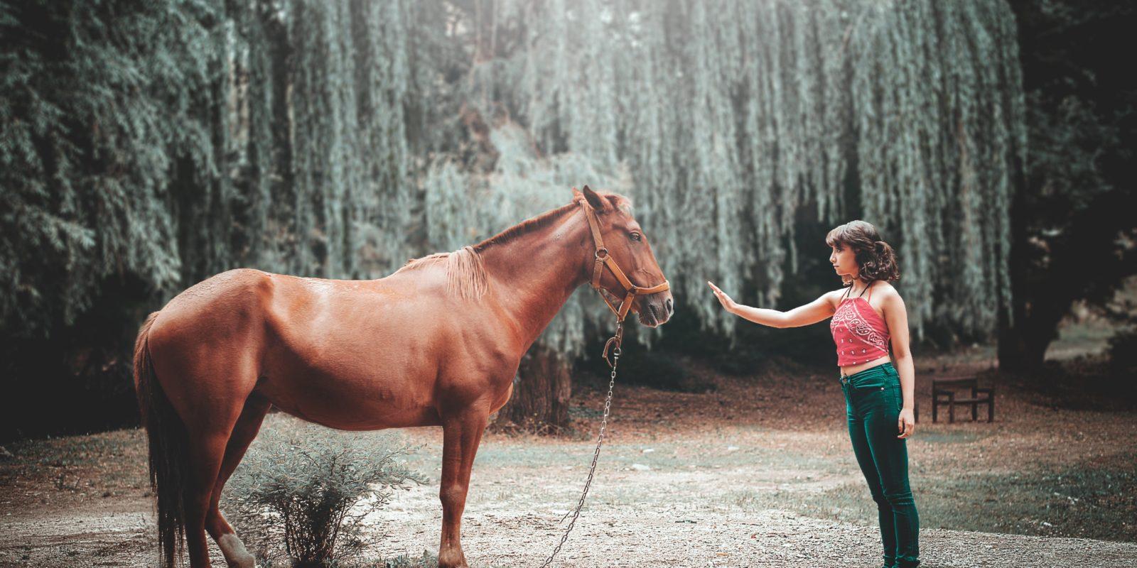 Eine Frau nähert sich langsam einem Pferd