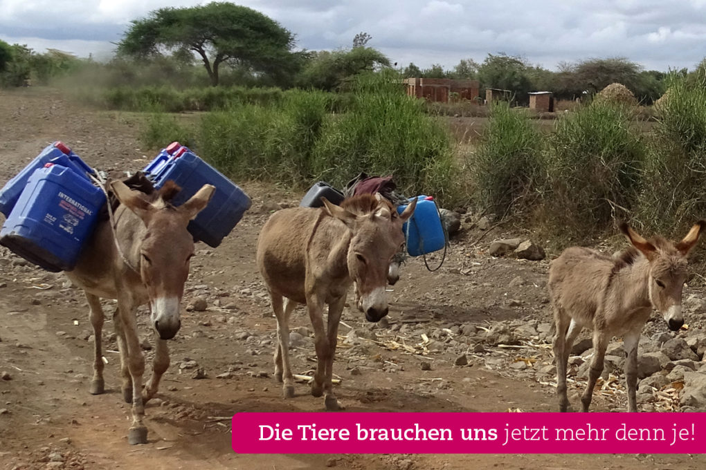 esel-schleppen-tansania-appeal