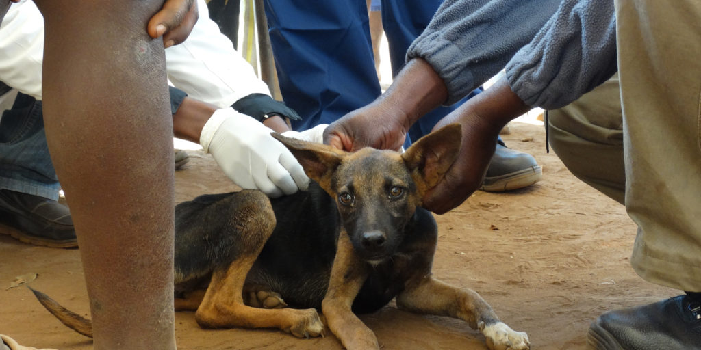 Ein Streunerhund wird tiermedizinisch versorgt