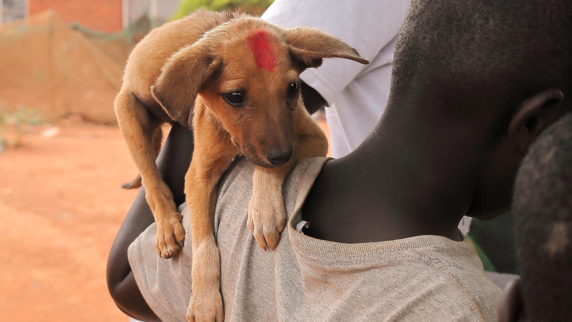 Die Tollwutimpfung könnte diesem Hund das Leben retten