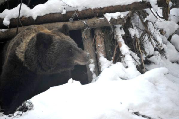 braunbaer-ukraine-winterruhe-schutzzentrum-welttierschutzgesellschaft-2