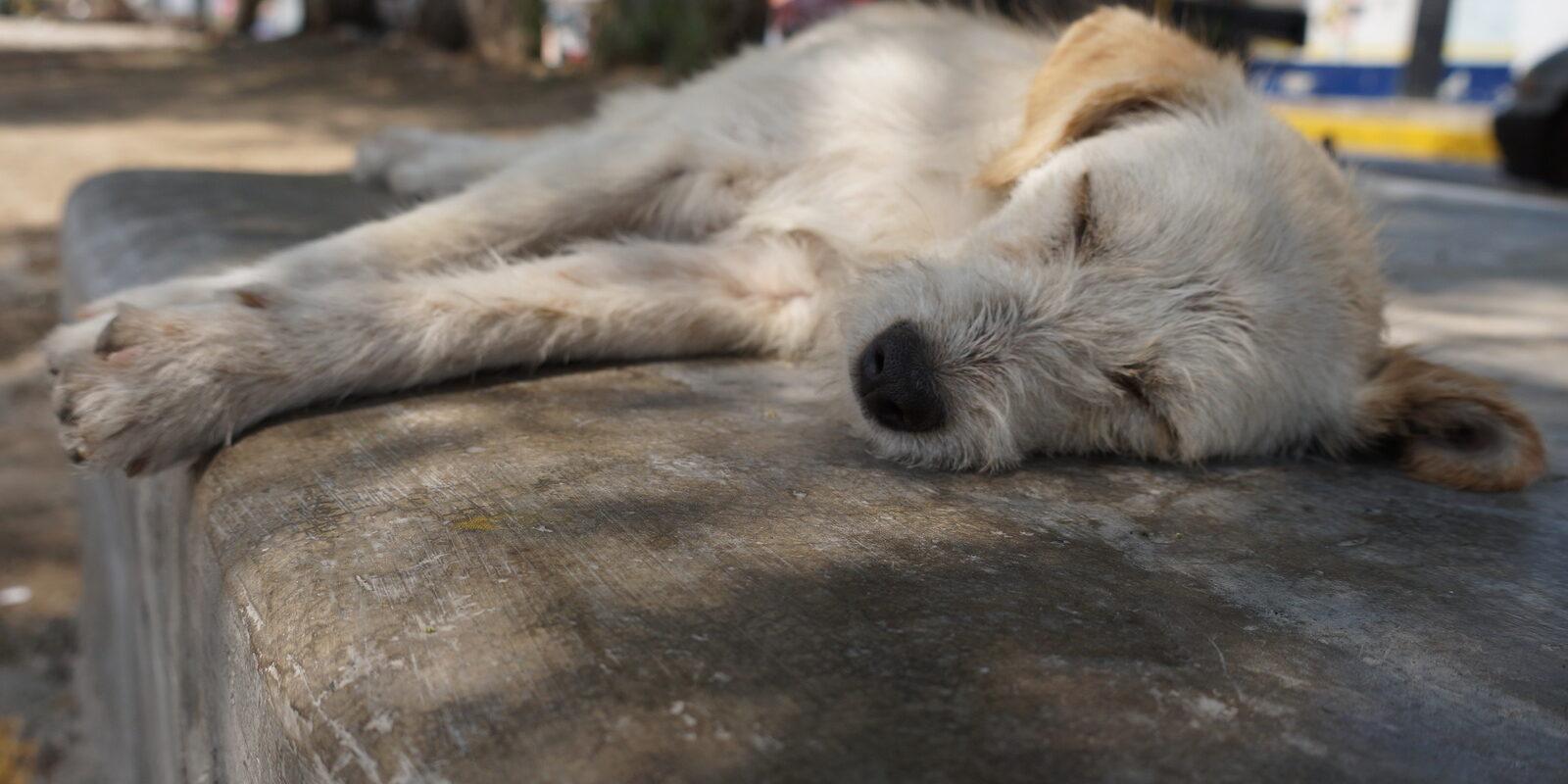 Streunerhunde in Griechenland: Durch Mikrochippen und Registrieren wollen wir die Population der Streunerhunde in Griechenland unter Kontrolle bringen