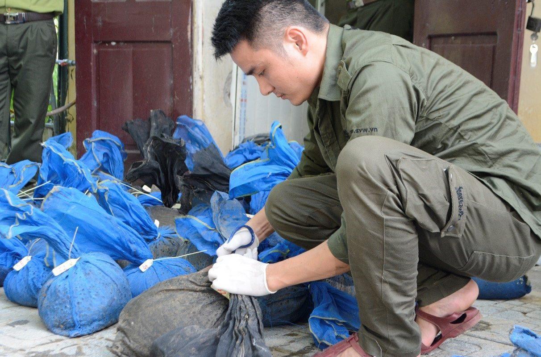 Rettung von Schuppentieren aus dem illegalen Wildtierhandel