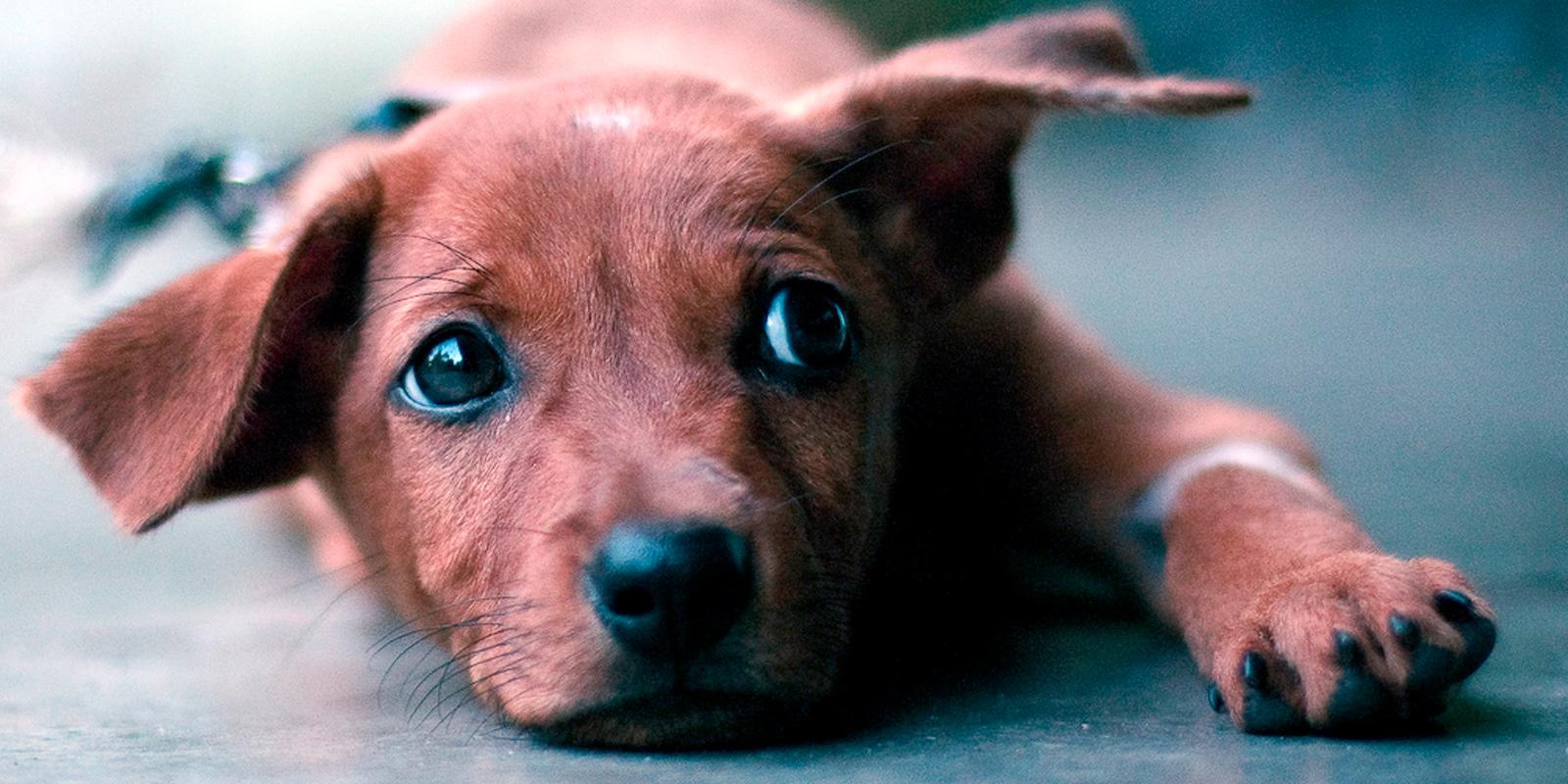 Streunerhunde in Griechenland: Auf Ägina werden jährlich rund 200 Hunde ausgesetzt