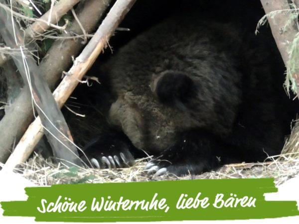 tierschutznews-januar-aufmacher-baeren-winterruhe