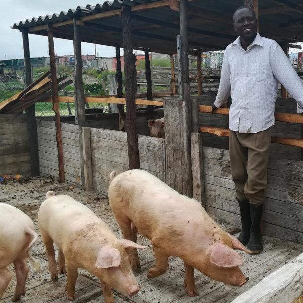 tierschutznews-januar-suedafrika-landwirt-schweine