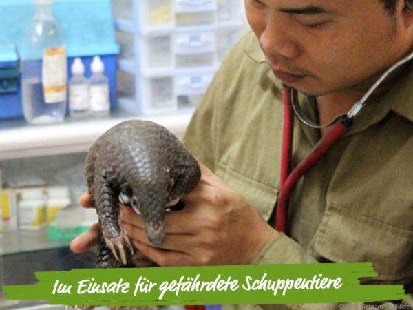 Vietnam-Wildtiere-Vietnam-Schuppentier-Tierarzt-Tierschutz-Wischer