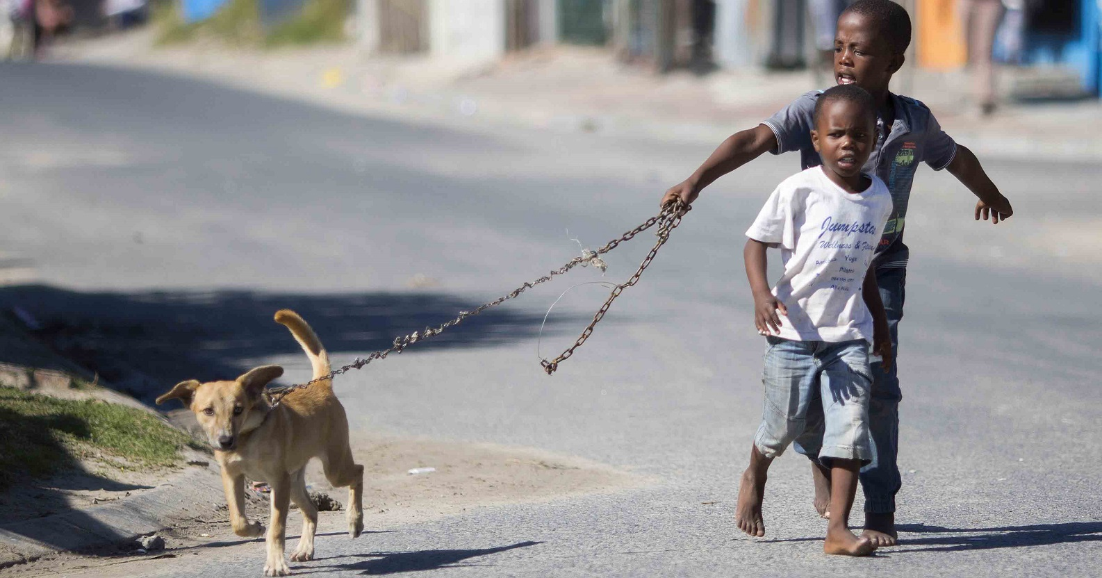 Mobile clinic for pets in South Africa - Welttierschutzgesellschaft e V