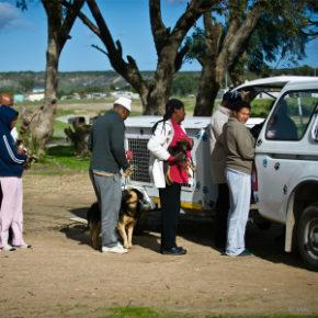 mobile-haustier-klinik-kapstadt-suedafrika-tierschutz-welttierschutzgesellschaft-300x300