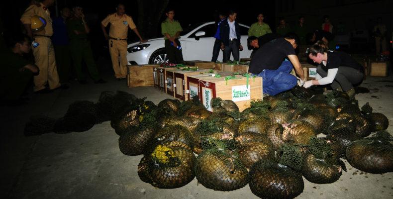 Konfiszierung von Schuppentieren in Vietnam