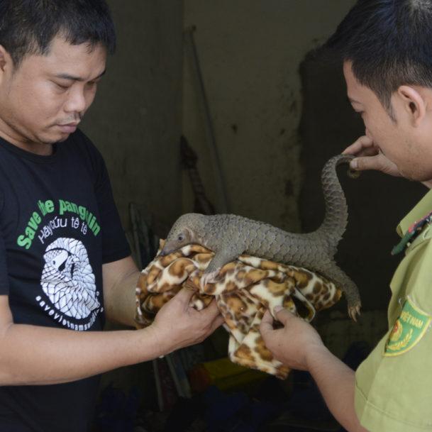 schuppentier-wildtierhandel-konfiszierung-tierschutz-vietnam-300x300