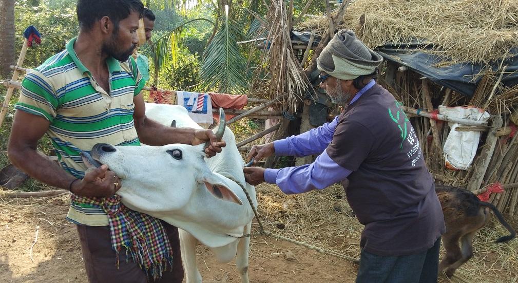 Im Rahmen der Soforthilfe in Indien werden Tiere behandelt und Tierhalter informiert