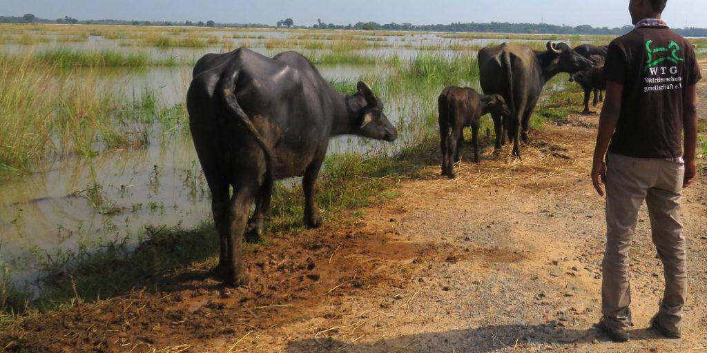 Soforthilfe nach der Flut. Viele Weideflächen stehen unter Wasser