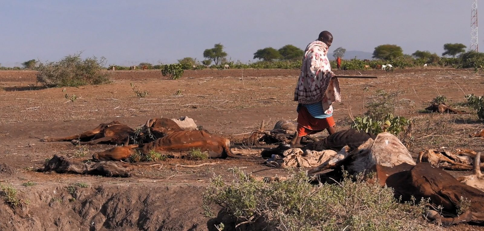 Aid for livestock during droughts: Learning to be prepared for a drought