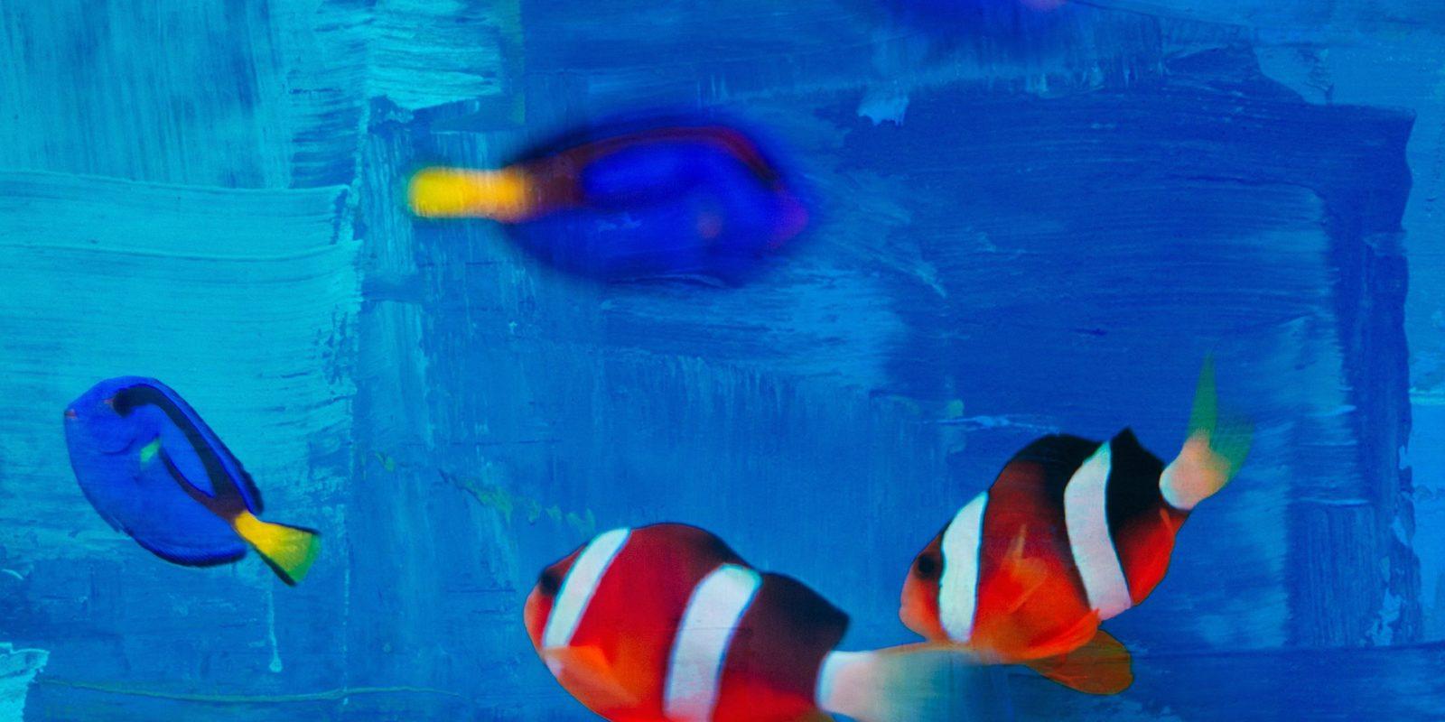 Tiere im Film: Auch Fische sind beliebte Haustiere. Ihre Haltung ist jedoch zum Teil sehr anspruchsvoll.