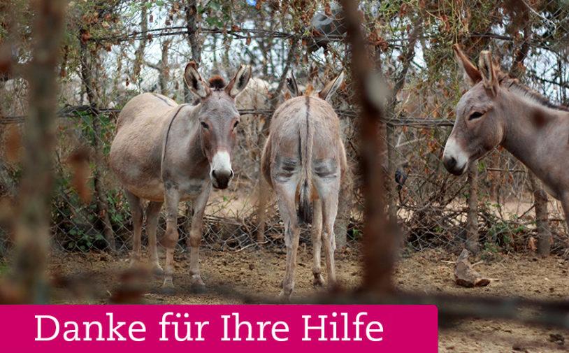 © Wiebke Plasse -Welttierschutzgesellschaft e.V. (Esel-Tansania)