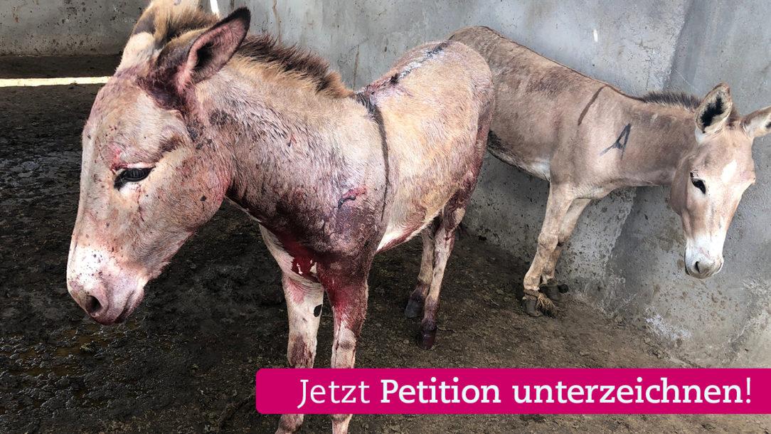 Schlachthof-Kenia-© Welttierschutzgesellschaft e.V (wtg2)