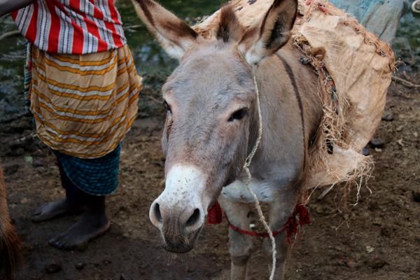 esel-kenia-tierschutz-schlachtung-petition-welttierschutzgesellschaft