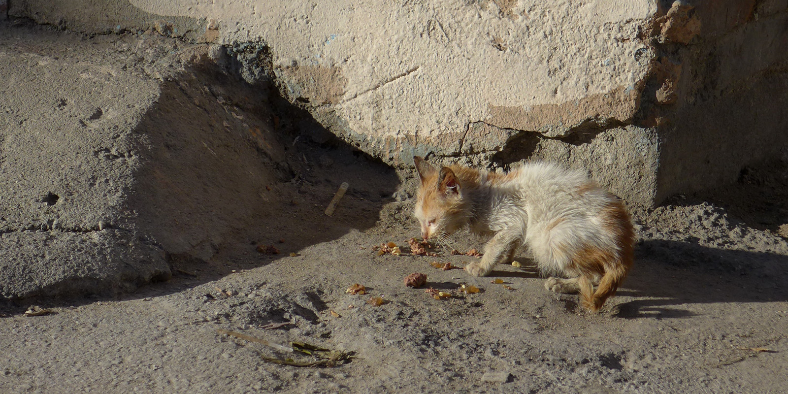 Die Katzenfängerin von Plowdiw ist täglich in ihrer bulgarischen Heimatstadt unterwegs, um besitzerlosen, oftmals kranken und schwachen Katzen zu helfen.