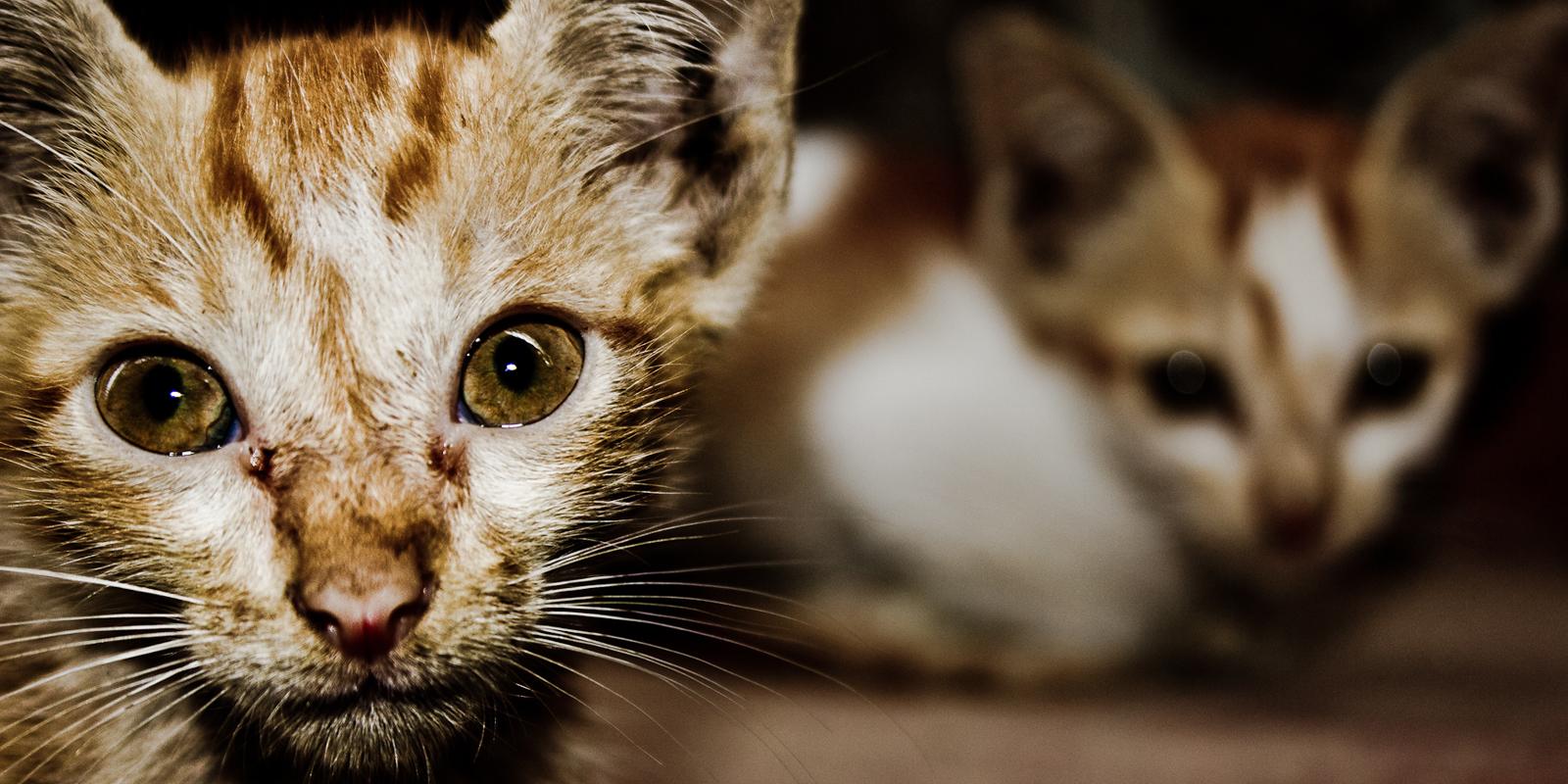 Auch in Deutschland gibt es streunende Katzen: schätzungsweise sind es zwei Millionen.