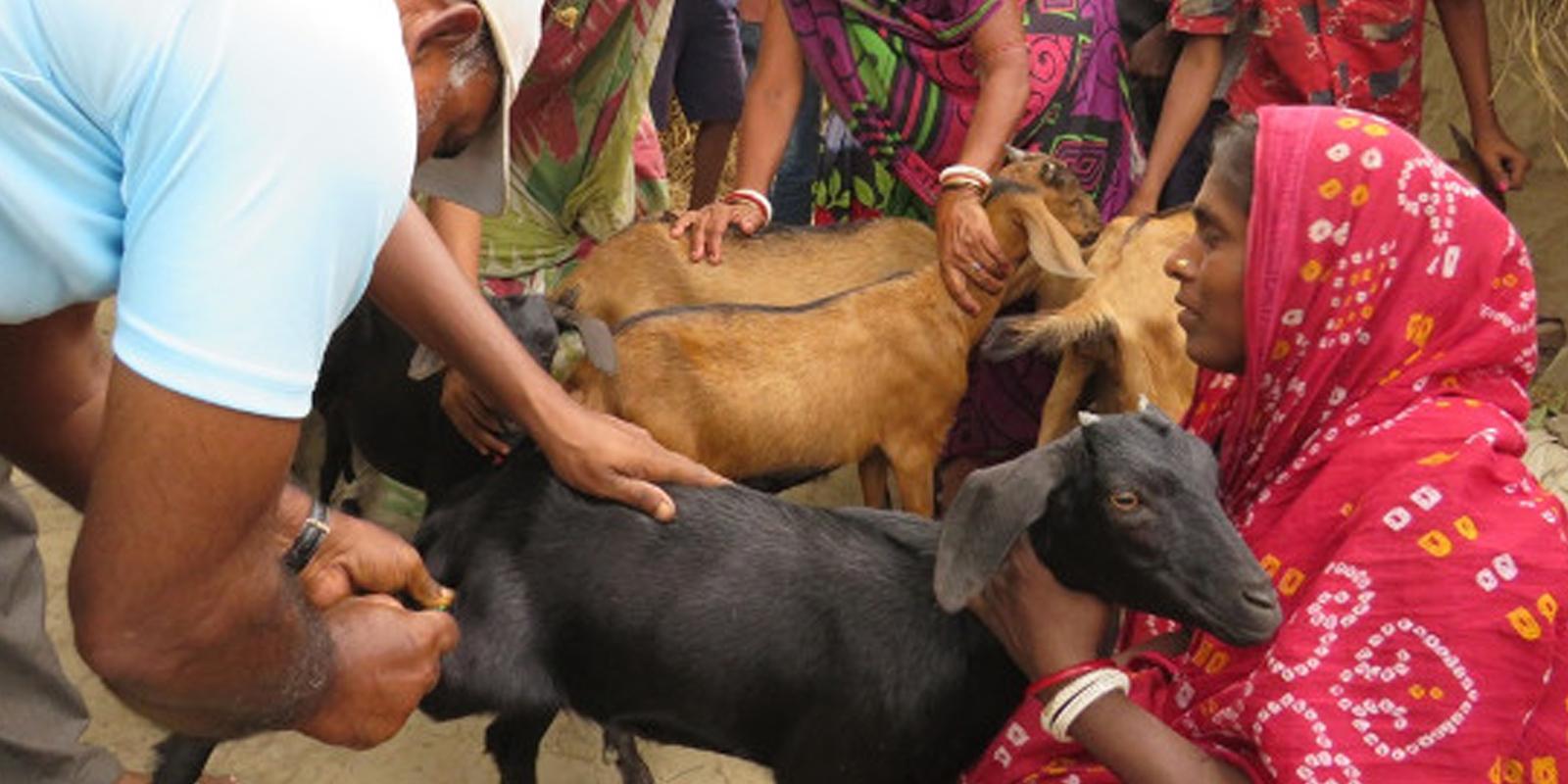 Tierwohl in der Entwicklungszusammenarbeit