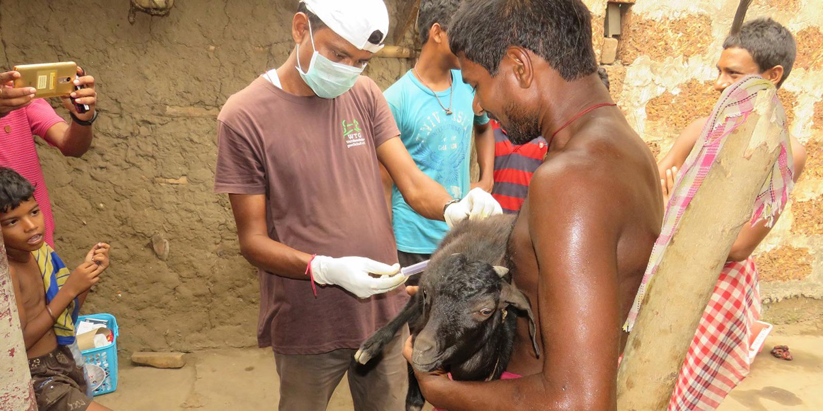 Soforthilfe in Bildern: Eine Ziege wird vom Tierarzt des Notfallteams versorgt