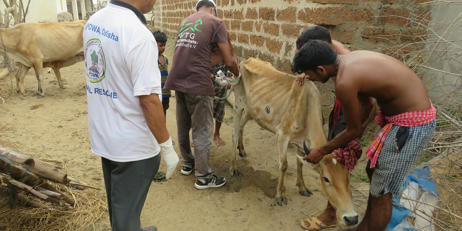 Soforthilfe in Bildern: Verletzte Tiere werden tiermedizinisch versorgt