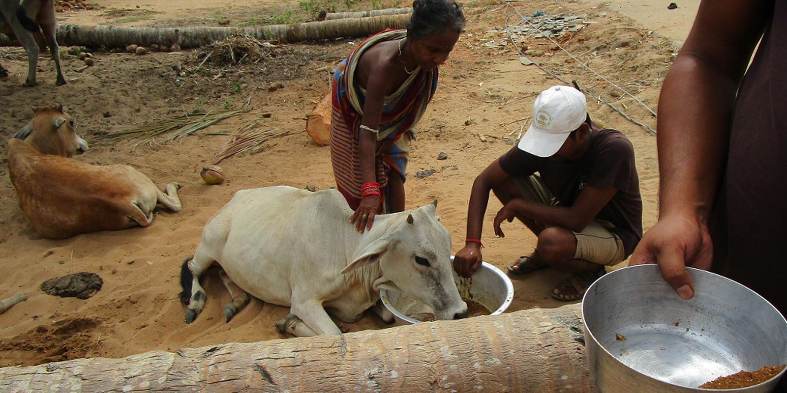 Soforthilfe in Bildern: Das tagelange Fehlen von Futter und Wasser hat die Tiere geschwächt