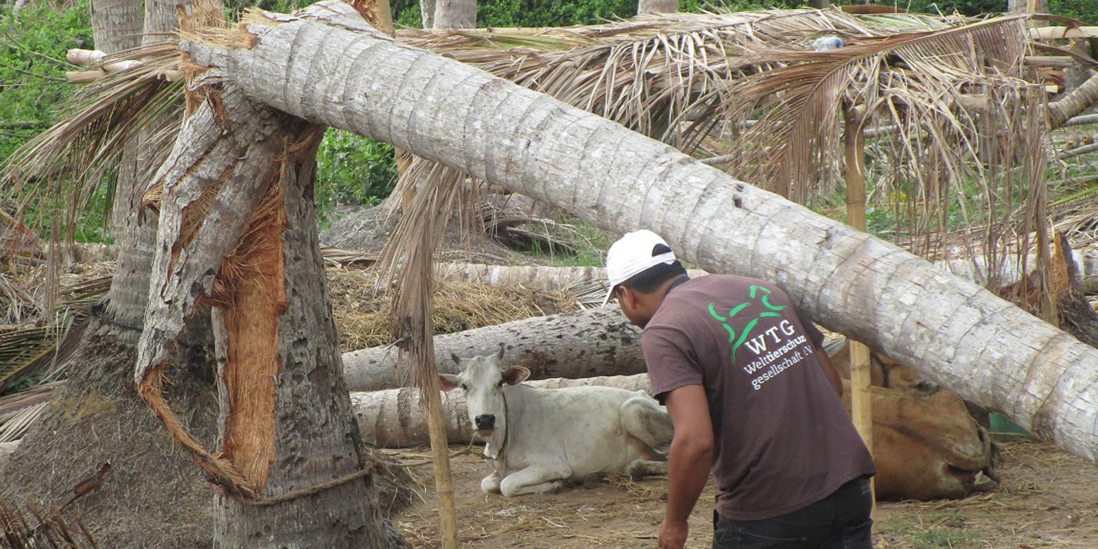 Soforthilfe in Bildern: Viele Tiere wurden von umstürzenden Bäumen verletzt
