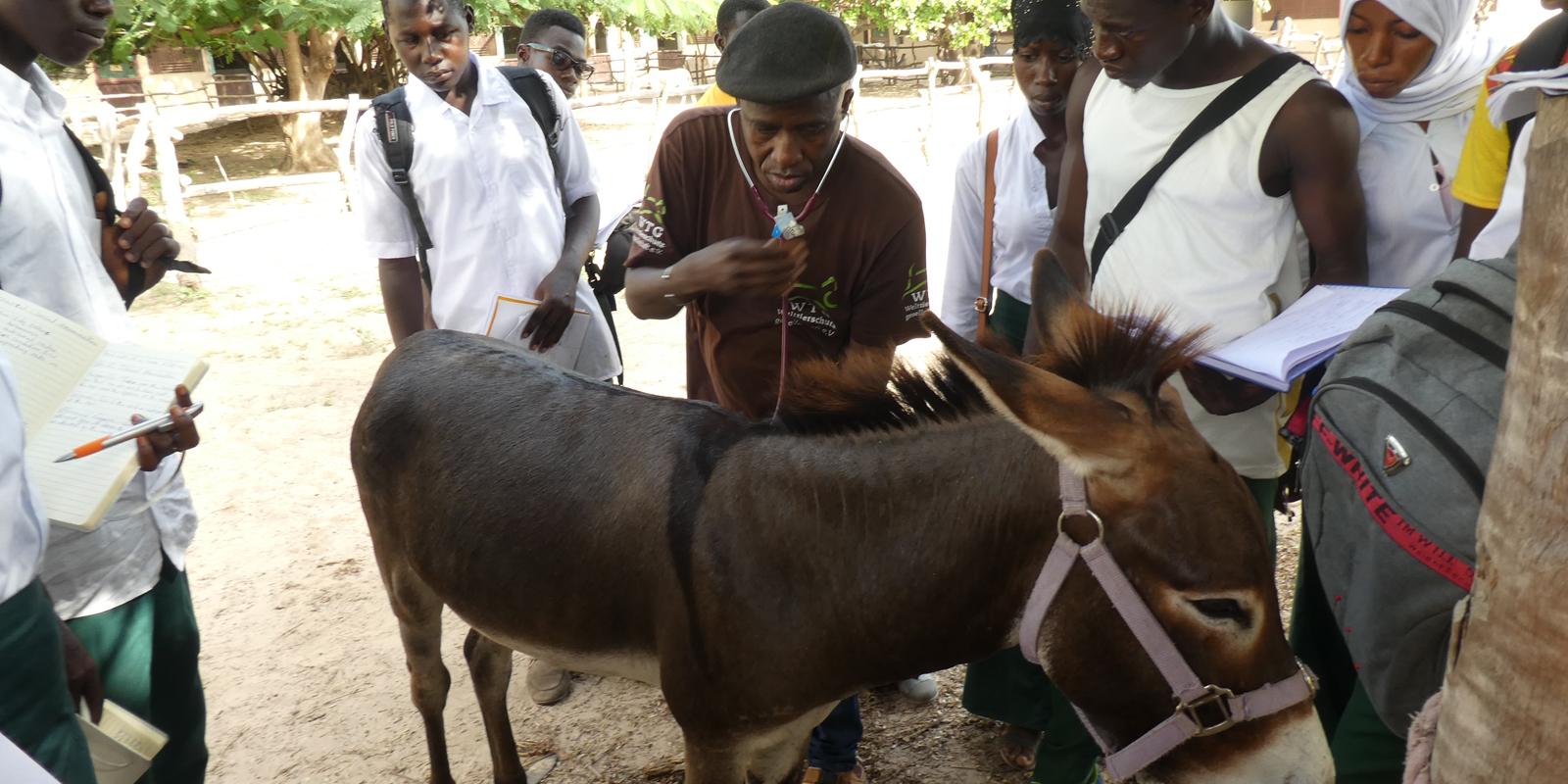 In Gambia fand unser erstes Projekt statt.