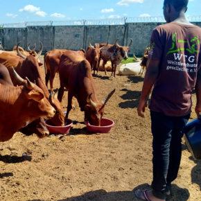 soforthilfe-nutztiere-tansania-flut-starkregen © TAWESO (3)