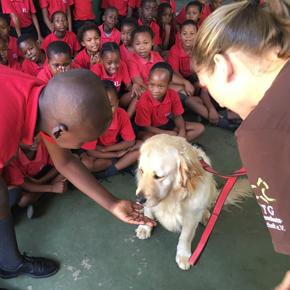 suedafrika-hunde-tierschutz-schule-kinder-welttierschutzgesellschaft