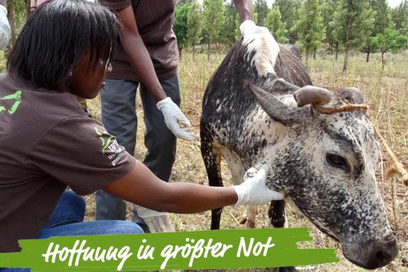 tansania-tierschutznews