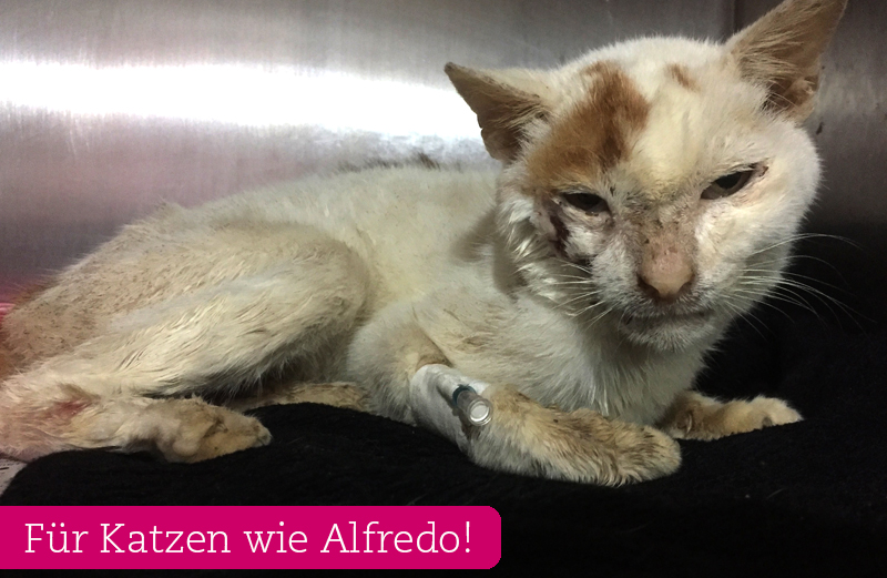 katze-alfredo-appeal