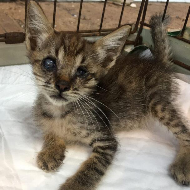 wonder-kitten-thailand