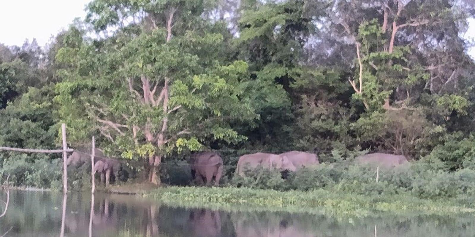 Extreme Trockenzeit auf Sumatra: Wildlebende Elefanten suchen die letzten Wasserstellen im Nationalpark auf