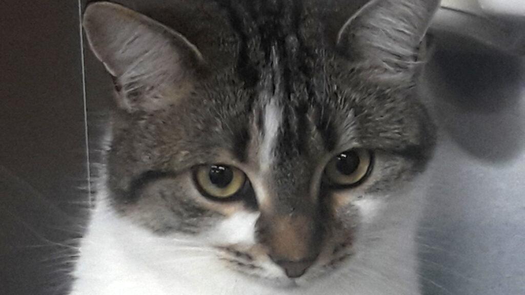 Minie aus Sinspelt ist eine ganze liebe Katze, wie ihre Halterin findet.