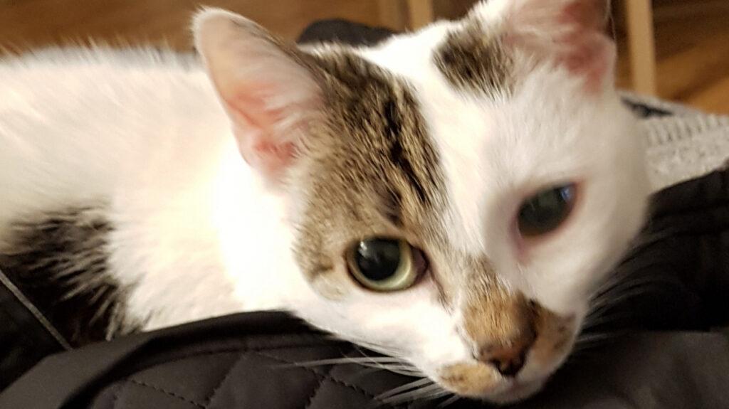 Sally, die Katze aus dem Tierschutz, hat ein tolles Zuhause gefunden.