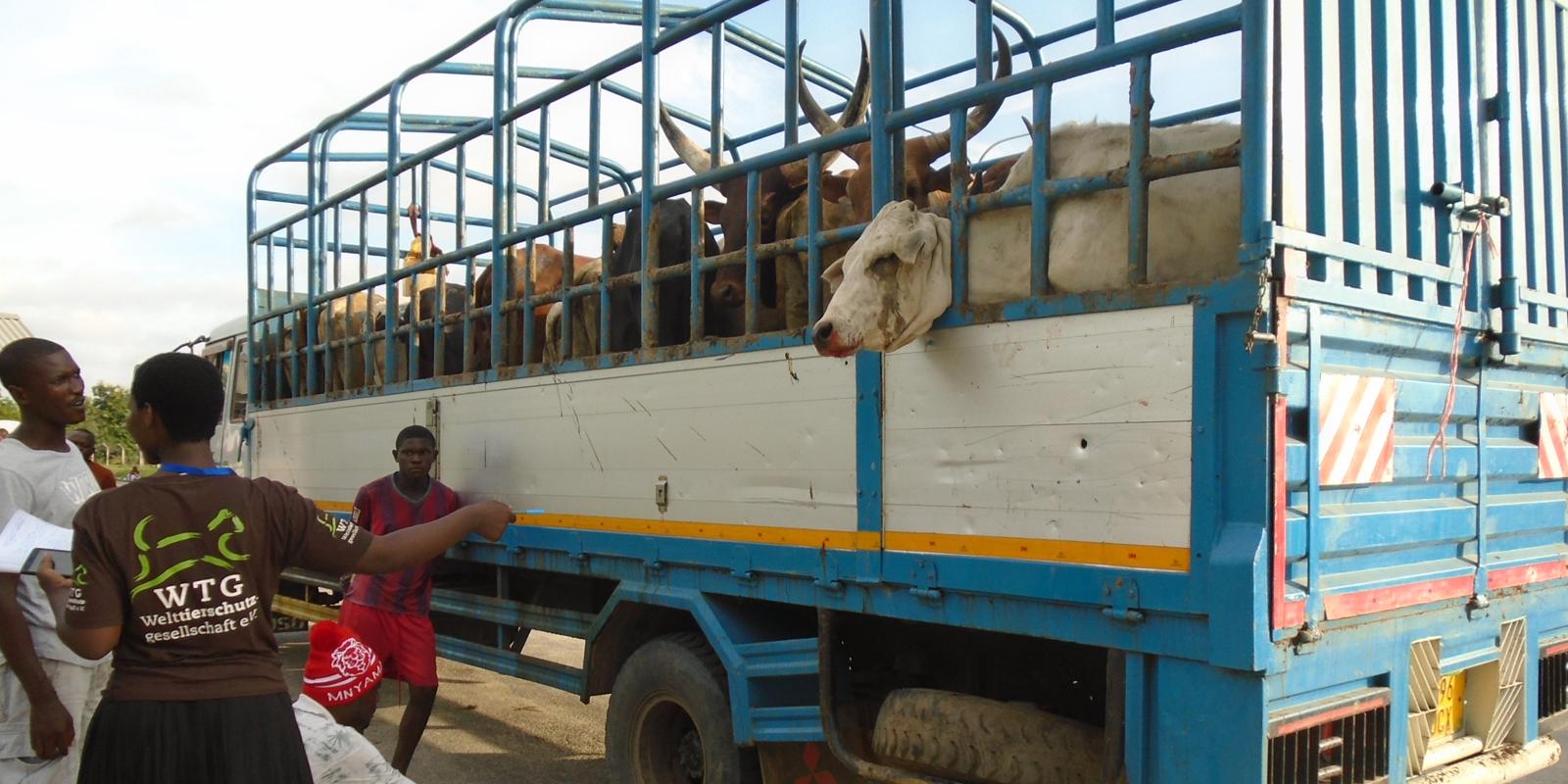Mehr Tierwohl auf Tansanias Märkten: