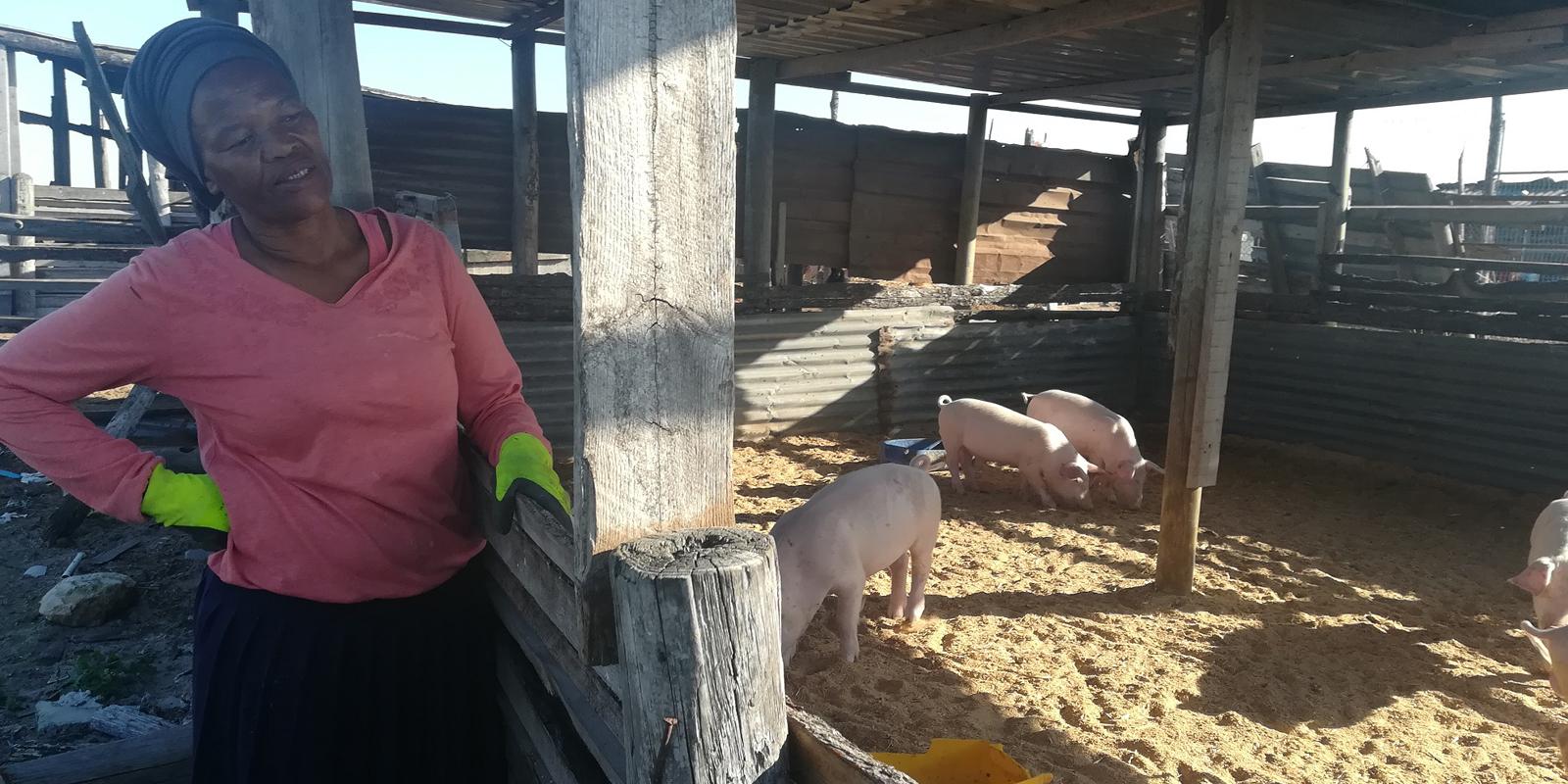 Den Nutztierne in Kapstadt geht es besser