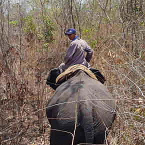 sumatra-elefanten-duerre-regen-klima-tierschutz-welttierschutzgesellschaft