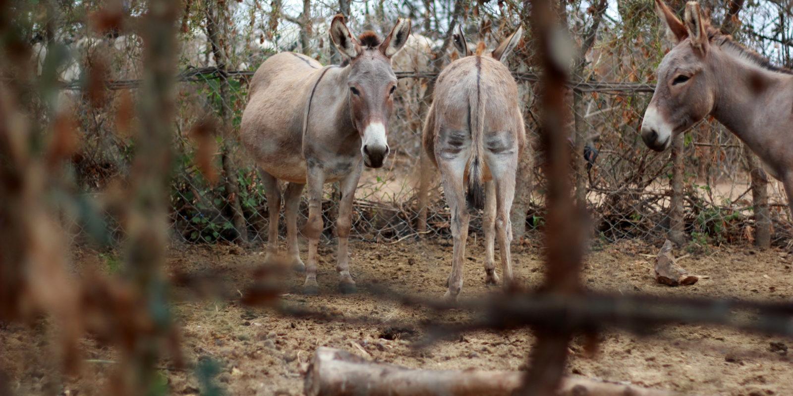 Eselschutz in Tansania