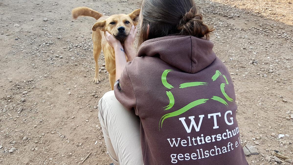 © Welttierschutzgesellschaft e.V (1)