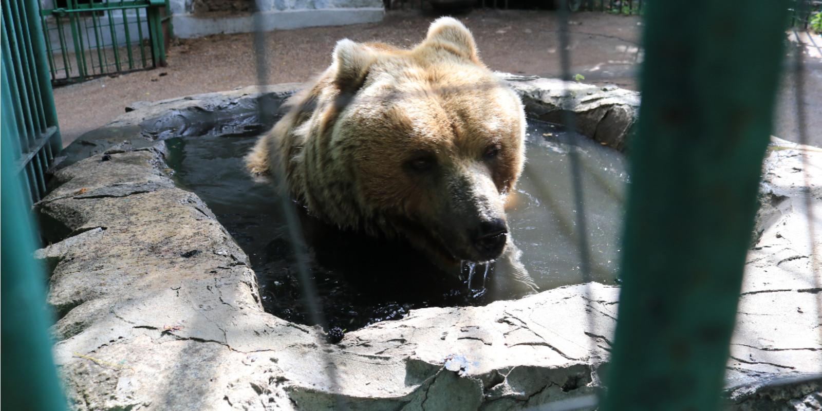 Rettung der Bärin aus dem Zoo Galati