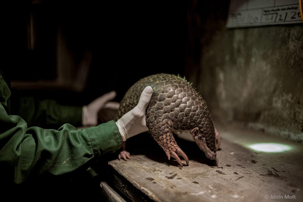 """""""Meine Reise führte mich in den Cuc Phuong National Park, den ältesten Nationalpark Vietnams und einen der bedeutendsten Orte für die Artenvielfalt des Landes. Auch das Schutzzentrum von Save Vietnam's Wildlife befindet sich hier."""""""