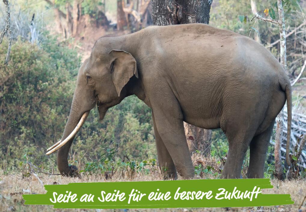 elefant-sumatra