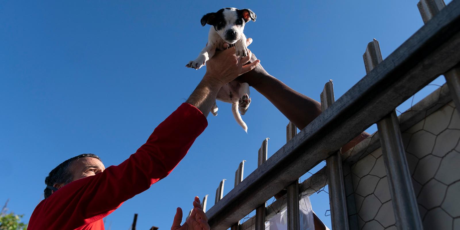 WTG-Nothilfefonds: Hunde und Katzen in Khayelitsha